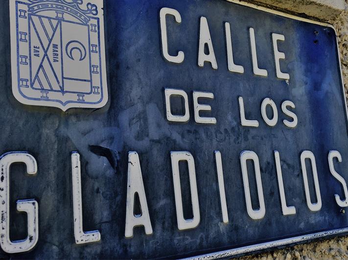 gladiolos